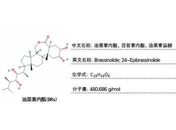 芸苔素内酯检测,油菜素内酯检测,油菜素甾醇检测