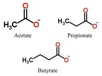 短链脂肪酸SCFAs检测,短链脂肪酸定量分析,挥发性脂肪酸检测