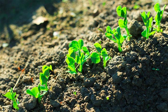 土壤环境监测